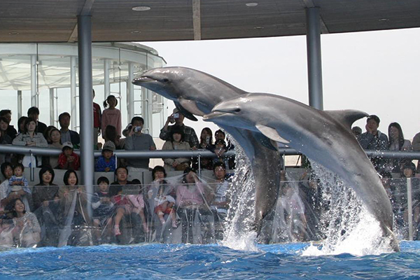 Oita Marine Palace Aquarium 「mitimago」